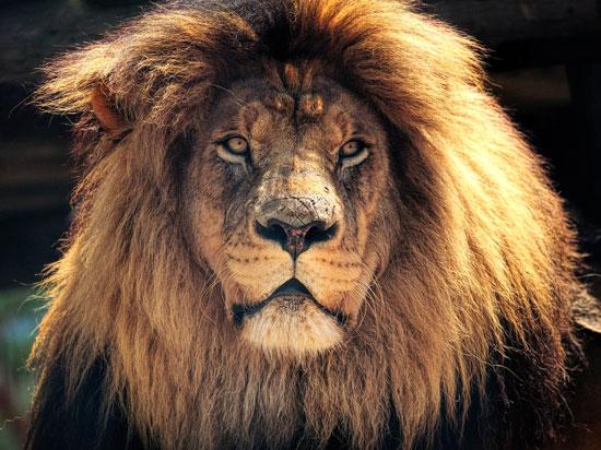 África do Sul - Kruger Park